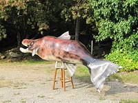Creating a 9 foot Salmon